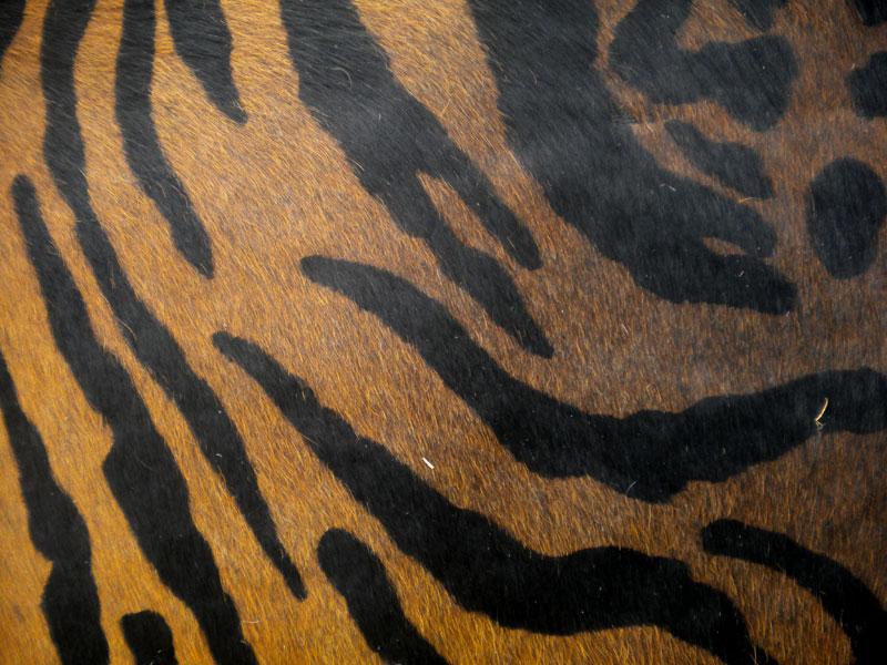 Bengal Tiger Print Printed Cowhide Skin Rug Cow Hide